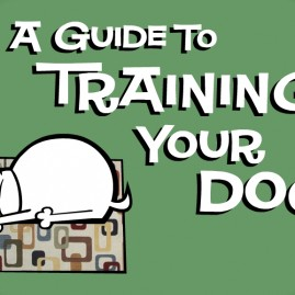 A Guide To Training Your Dog
